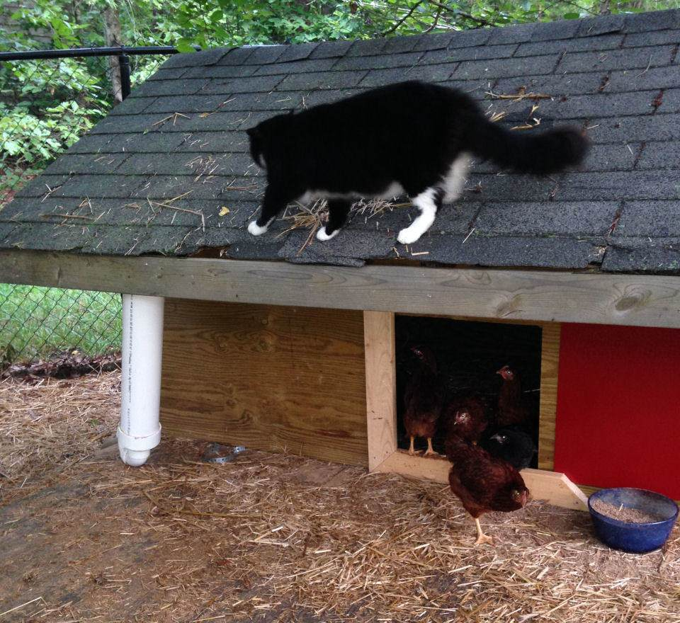 The finished Chicken Coop prior to paint. Fat Cat Approves.