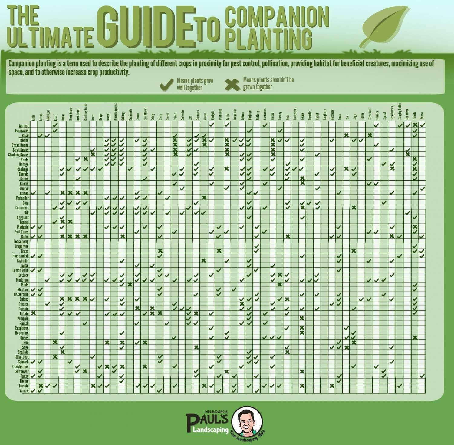 Kitchen Garden Companion Design9061280 Vegetable Garden Companion Planting Companion