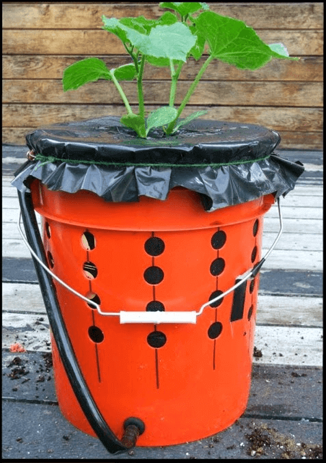 how to grow tomatoes in a grow box
