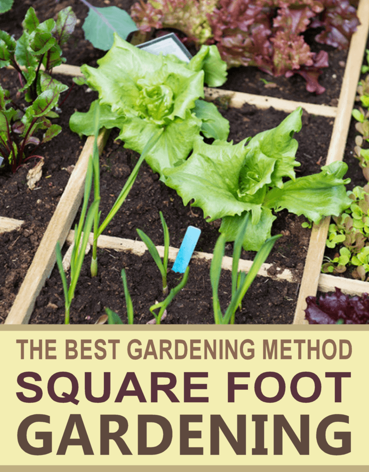 Square Foot Gardening Pinterest