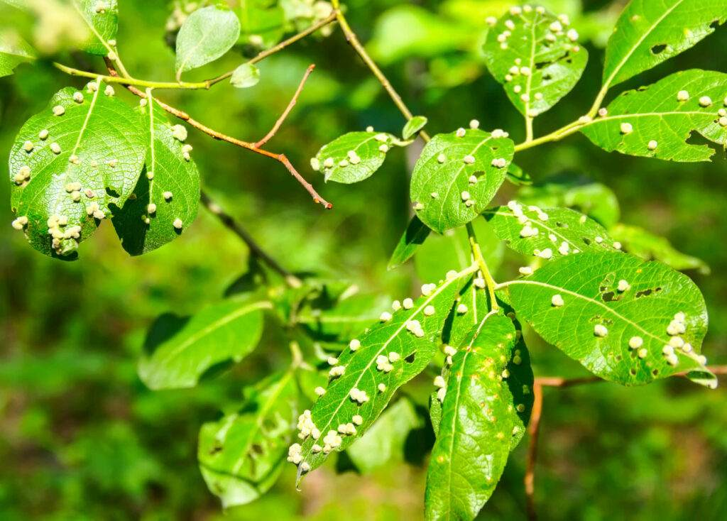 5 ways to get rid of aphids
