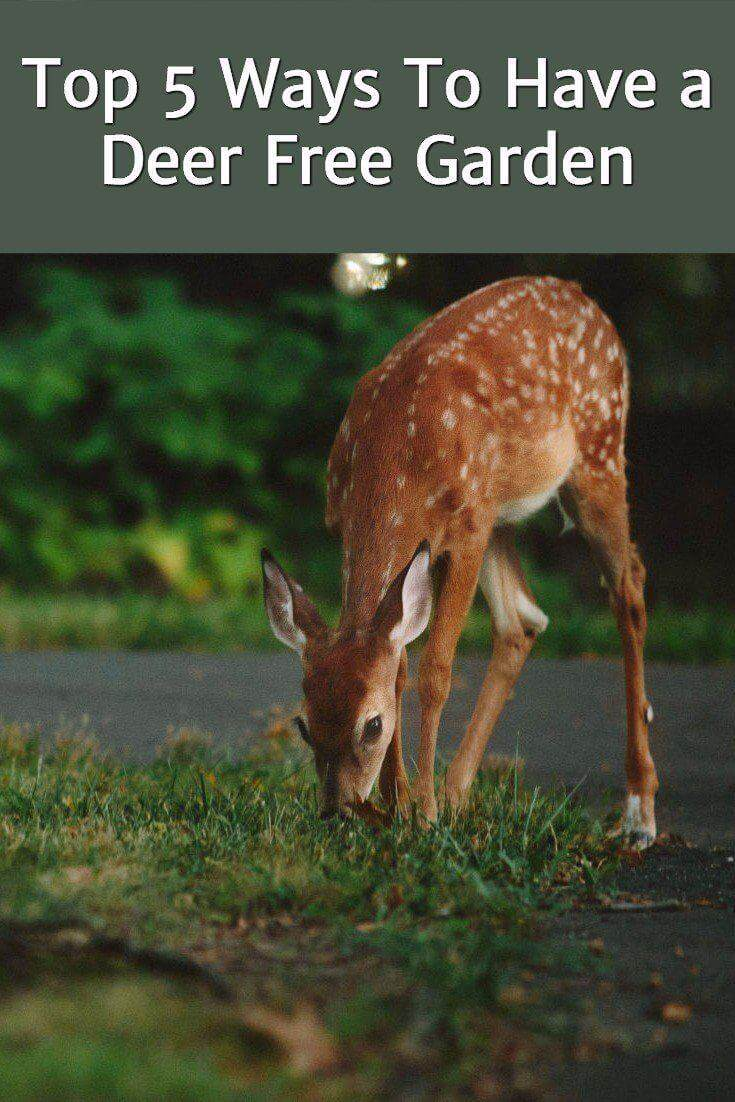 5 ways to have a deer free garden