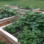 How to Build a Raised Garden Bed for Cheap