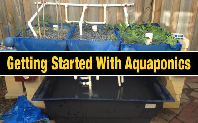 DIY Aquaponics Projects For Beginners