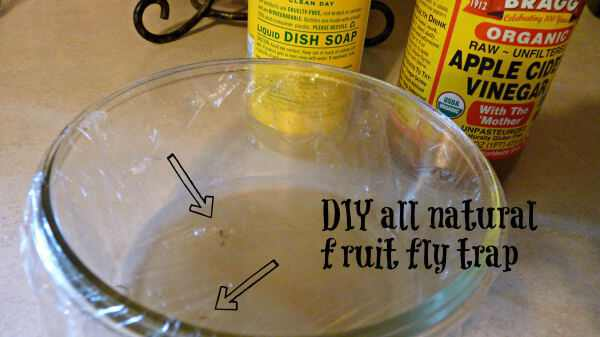 10 Ingenious DIY Mosquito and Fly Traps