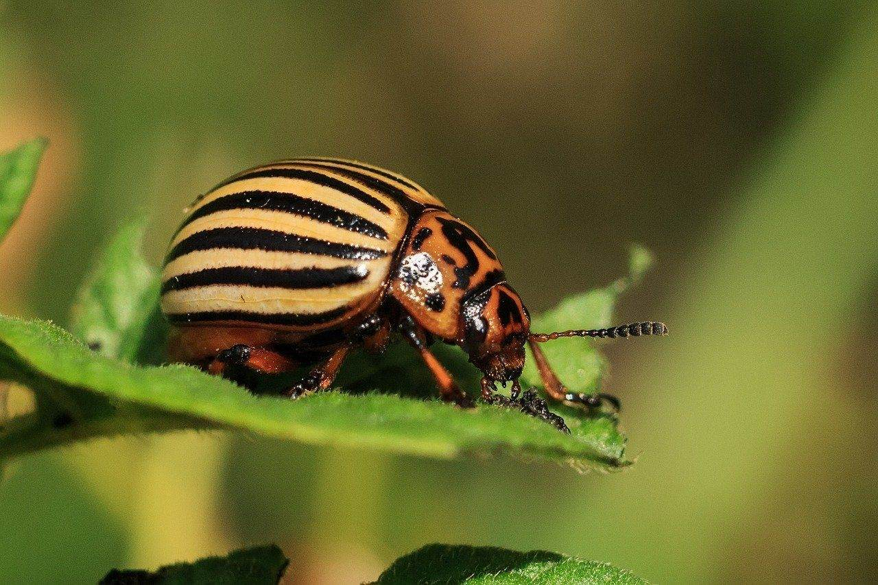 5 Sustainable Pest Control Strategies for Farming & Agriculture